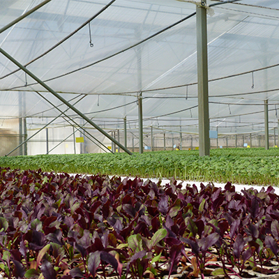 cultivo de producción ecológica