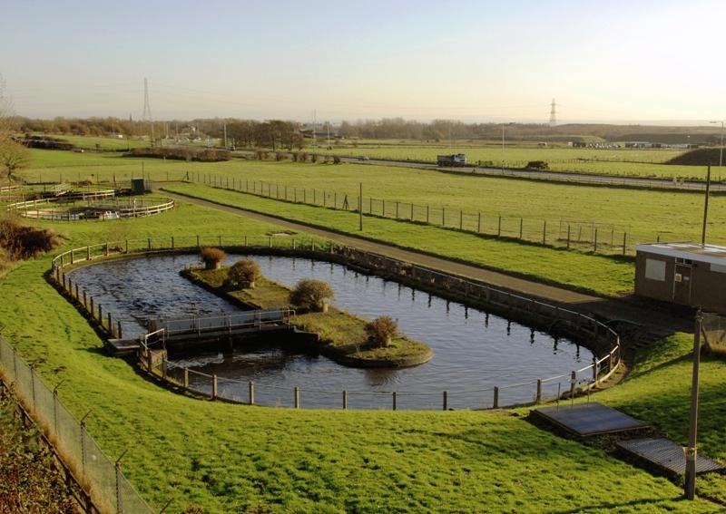 fitodepuradora tratamiento aguas residuales