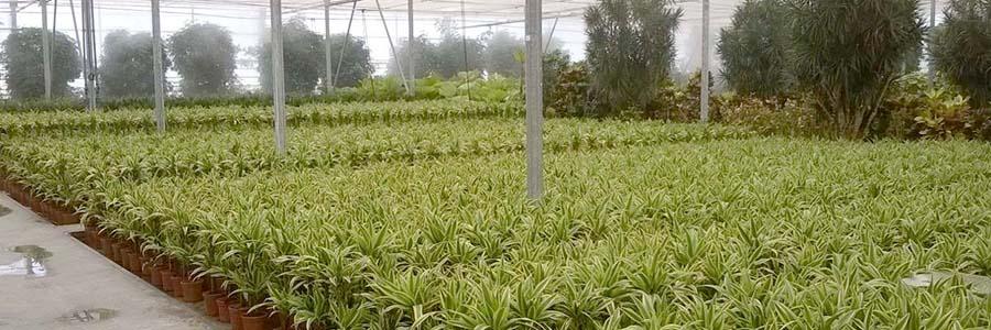 cultivo con sustratos ecológicos