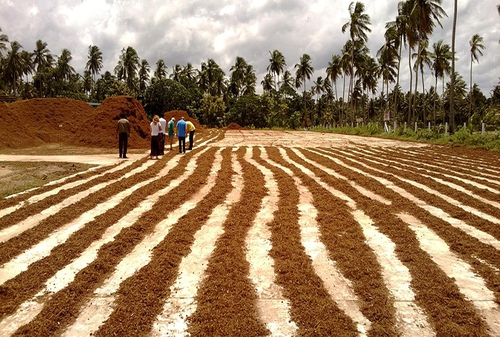sustrato_hidroponía_cultivo_ecológico